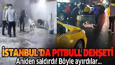 İstanbul Seyrantepe'deki pitbull dehşeti kamerada! Tazyikli su sıkarak güç bela ayırdılar