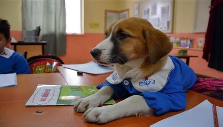 """Tokat'ta Küçüklerle Birlikte Okula Giden Çalışkan Köpek """"Fındık"""