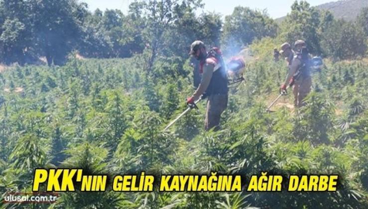 Diyarbakır'da narko-terör operasyonu: 22 milyon kök Hint keneviri ele geçirildi