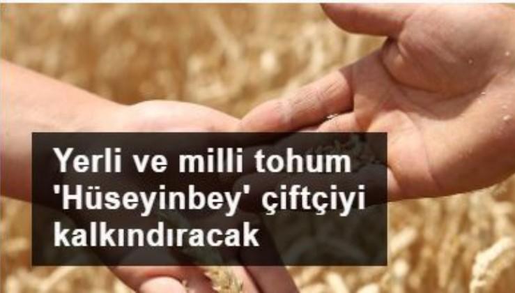 Yerli ve milli tohum 'Hüseyinbey' çiftçiyi kalkındıracak