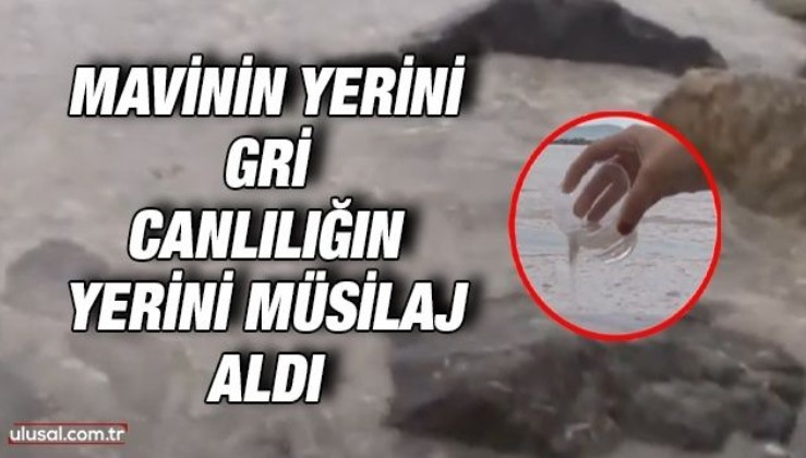 Kadıköy sahili tamamen müsilaj ile kaplandı