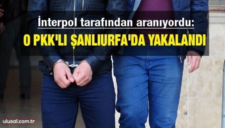 İnterpol tarafından aranıyordu: O PKK'lı Şanlıurfa'da yakalandı