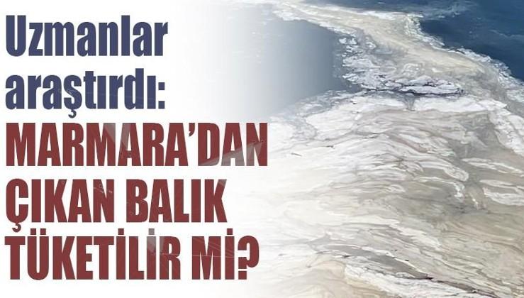 Uzmanlar araştırdı: Marmara'dan çıkan balık tüketilir mi?
