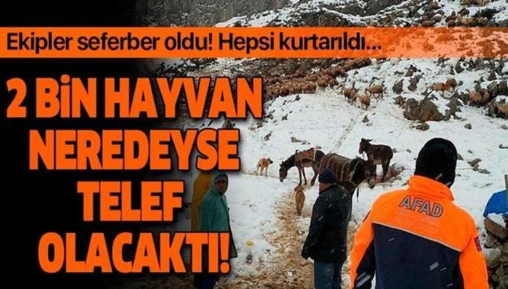 Kahramanmaraş Elbistan'da yoğun kar yağışı nedeniyle mahsur kalan çobanlar ve 2 bin hayvan kurtarıldı