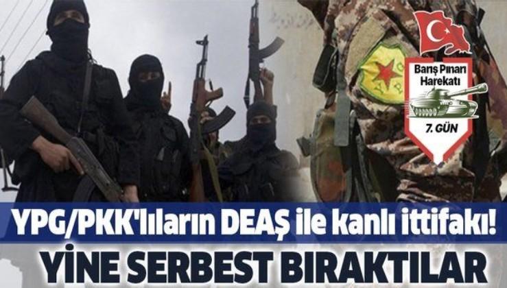 Son dakika: YPG/PKK'lılar, terör örgütü DEAŞ mensuplarını serbest bıraktı