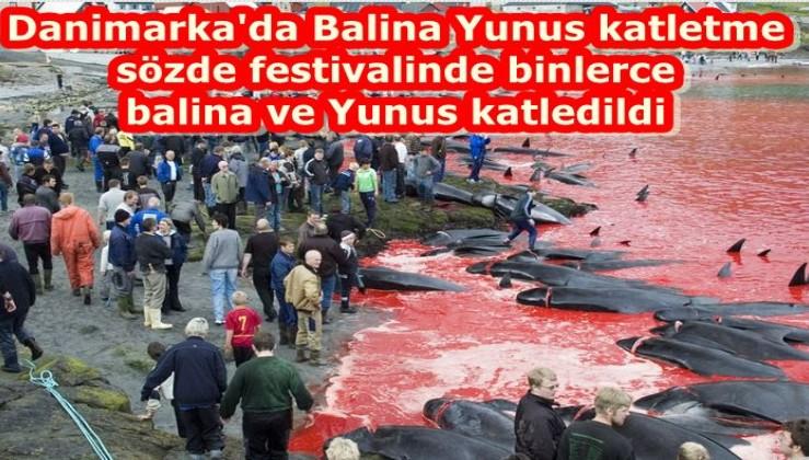 Danimarka'da binlerce yunus festivalde öldürüldü