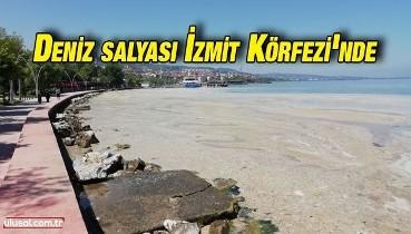 Deniz salyası İzmit Körfezi'nde etkisini sürdürüyor