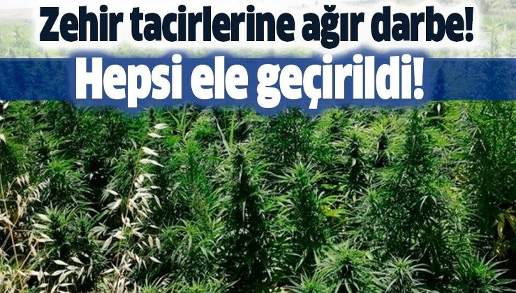 Diyarbakır'da dev uyuşturucu operasyonu! 4 milyon 623 bin kök Hint keneviri ve 800 kilogram esrar...