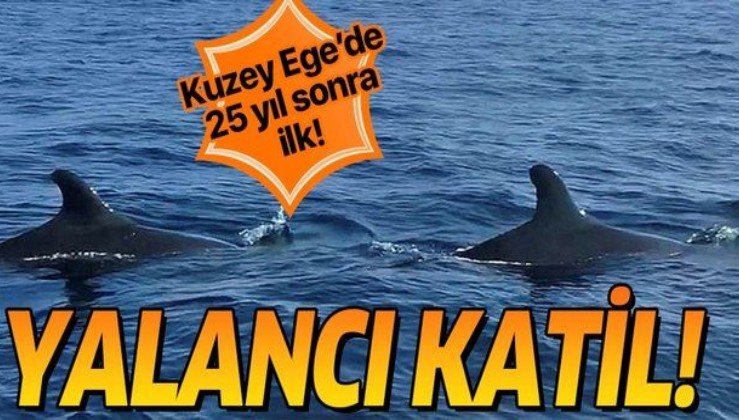 Gökçeada yakınlarında 25 yıl sonra ilk kez görüntülendi! Yalancı Katil balina...
