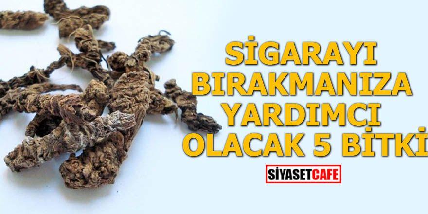 Sigarayı bırakmanıza yardımcı olacak 5 bitki