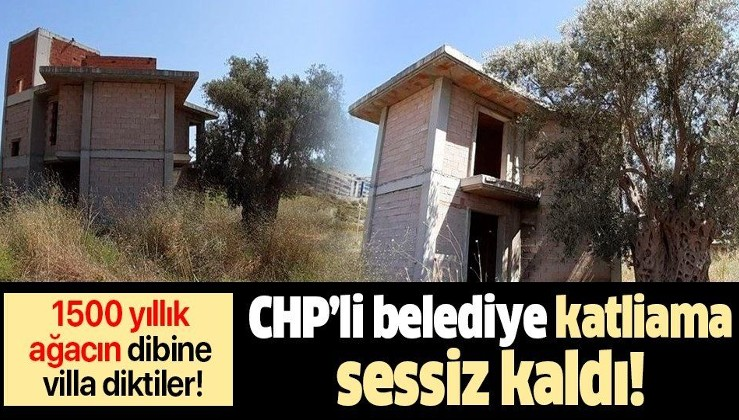 1500 yıllık ağacın dibine villa yapıldı, Belediye katliama sessiz kaldı!