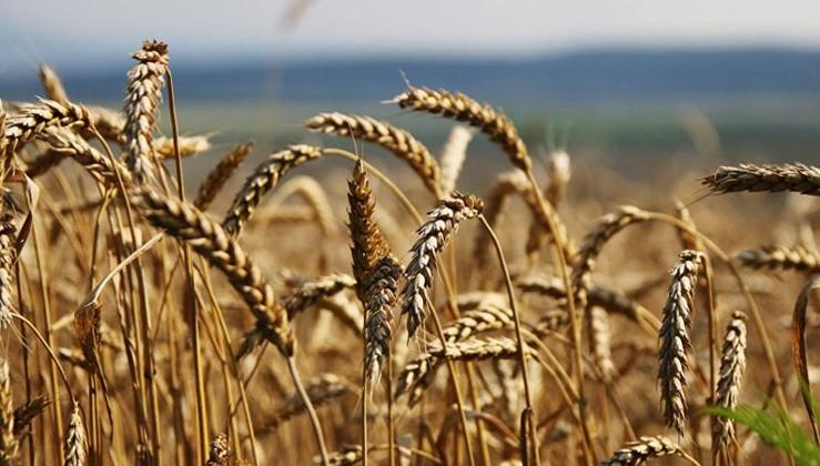 Türk tarımının ölüm fermanı: Çiftçiye ithalat sopası!