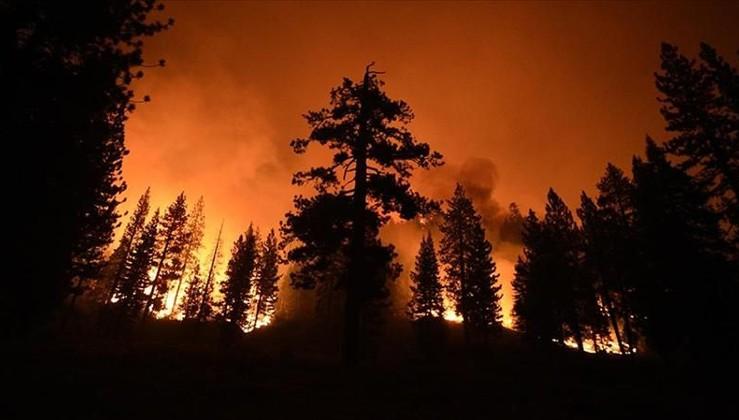 ABD'deki yangınlar dünyanın en büyük ağaçlarını tehdit ediyor