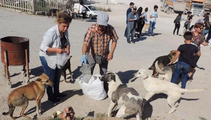 Çöplüğe terk edilen köpeklere hayvanseverler sahip çıktı