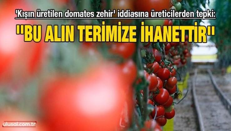 'Kışın üretilen domates zehir' iddiasına üreticilerden tepki: ''Bu alın terimize ihanettir''