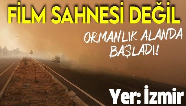 Son dakika: İzmir Aliağa'da orman yangını