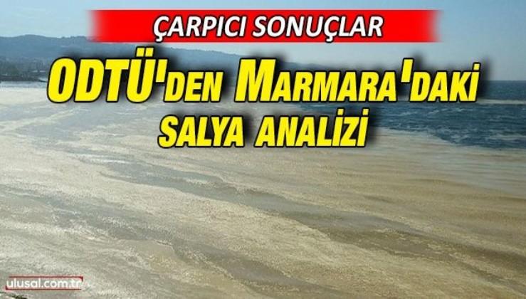 ODTÜ'den Marmara'daki salya analizi