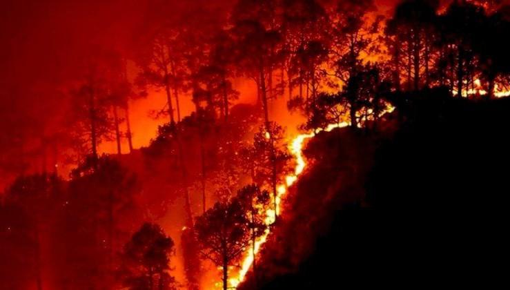 Suriye'de orman yangınları sürüyor