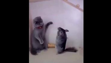 Бідний Котей. Сидів, нікого не чіпав, а тут нахабні гризуни-бандити атакували (кумедне відео)