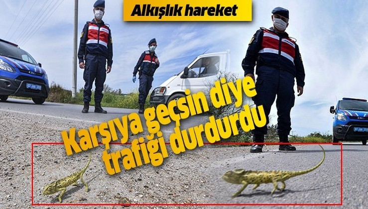 Antalya'da Jandarma, bukalemun geçene kadar trafiği durdurdu