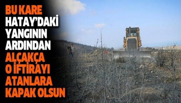 SEFERBERLİK BAŞLIYOR: Hatay'da yanan ormanlık alanları ağaçlandırmak için çalışma başlatıldı