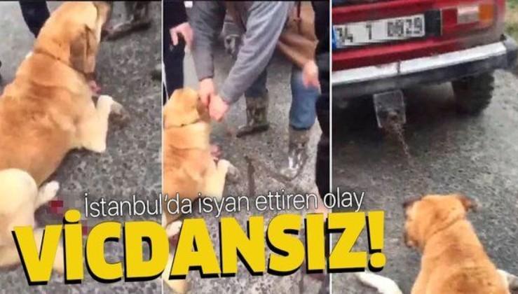 Büyükçekmece'de vahşet! Köpeği otomobilinin arkasına bağlayıp yerde sürükledi.