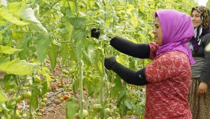 TZOB Genel Başkanı Bayraktar Dünya Çiftçiler Günü'nde konuştu: Çiftçi kazanırsa ülke kazanır
