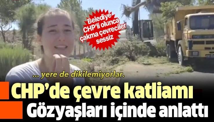 CHP'li belediyeden İzmir Karaburun'da çevre katliamı! Genç kız çam ağaçlarının iş makineleriyle sökülmesini gözyaşları içinde izledi