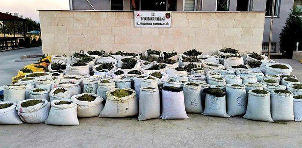 2 ton 628 kilo esrar, 826 bin kök Hint keneviri ele geçirildi