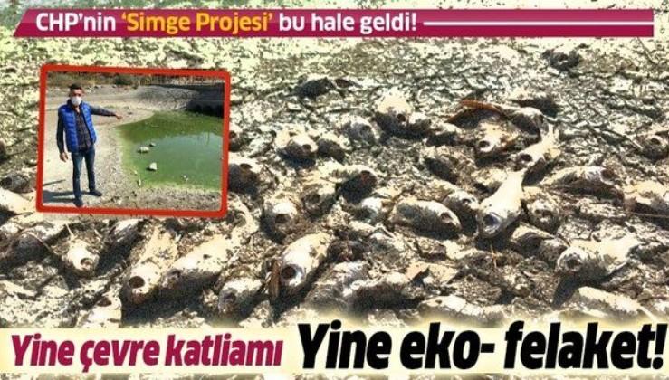 İzmir'in 'Simge projesi' denmişti! Göletlerde balıklar, kirlilik nedeniyle öldü