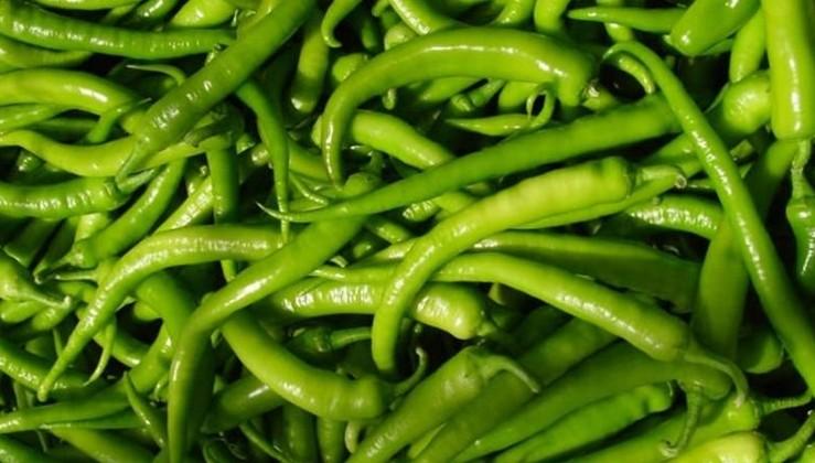 14.5 ton yeşil biber Kaliforniya çiçek tripsi bulunduğu için geri çevrildi