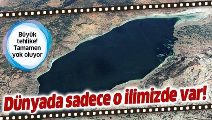 Dünyada sadece Burdur Gölü'nde bulunuyor! Tamamen yok olmak üzere...