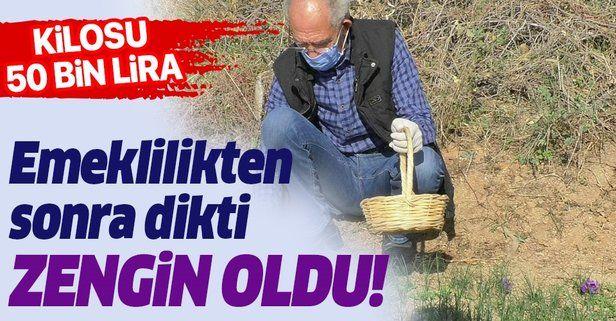 Emeklilikten sonra dikti zengin oldu! Safran soğanının kilosu ne kadar?