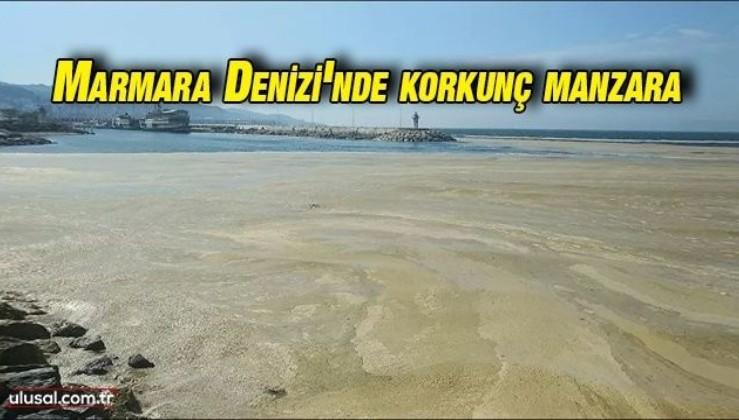 Marmara Denizi'nde salya kirliliği