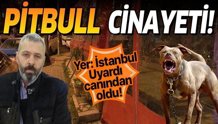 İstanbul Bahçelievler'de korkunç olay! Pitbull tartışması cinayetle sonuçlandı