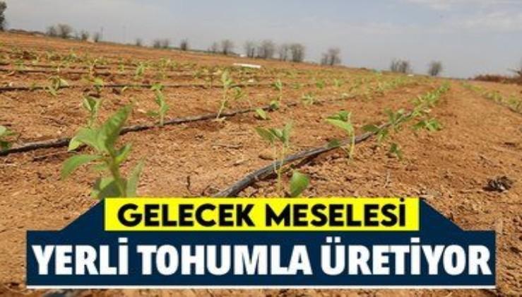 Önemli adım! Şanlıurfa yerli tohumlarla kendi biberini üretiyor