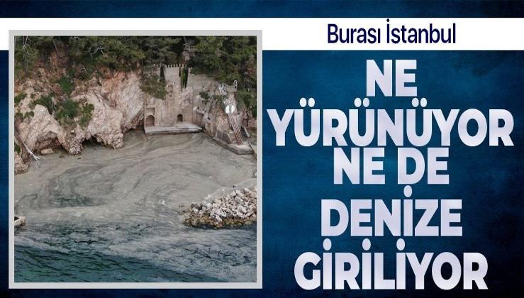 İstanbul'un dibindeki Büyükada sahillerini 'salya' sardı! Kokudan durulmuyor