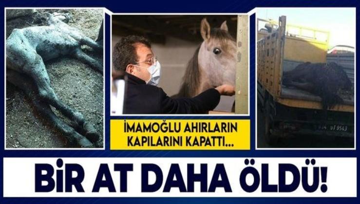 İstanbul Büyükşehir Belediyesi'nde kalan 115 attan biri daha öldü! Ekrem İmamoğlu ahırların kapılarını kapattı...