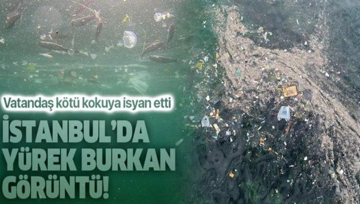 Son dakika: Yenikapı'daki kirlilik su altı drone kamerasında: Balıklar yaşam savaşı veriyor